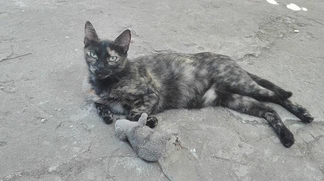 Pisica bunicii