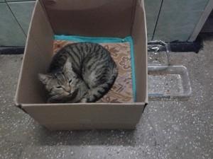 The homeless cat